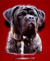 statuette photosculptée 10x15 cm chien cane corso 6 dog hund perro cane