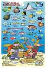 "Franko Caribbean Sea Reef Creatures Guide Laminated Fish ID Card 4"" x 6"""