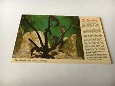 Vintage The Florida Sea Horse History Postcard