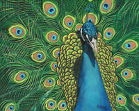 Original Artwork oil painting Peacock on canvas panel, wildlife 8x10""
