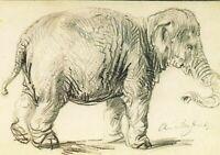 Vintage Art Postcard, An Elephant (1637) by Rembrandt Harmenesz Van Rijn IG1