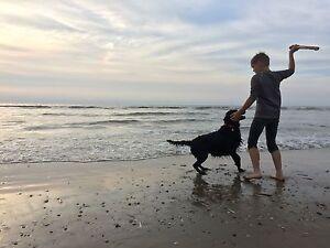 DÄNEMARK mit Hund, 1A Ferienhaus, Internet, Pool, PS4, TV, Strand, Angeln, Golf