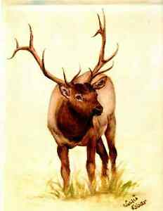 Elk print from canvas to Luster Original signed print  8 1/2 x 10 1/2