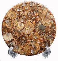 disco de fosiles de AMMONITE - Madagascar 73 grs
