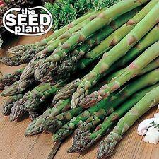 Mary Washington Asparagus Seeds -50 SEEDS-SAME DAY SHIPPING