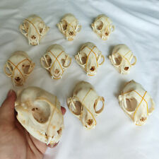 5PCS/10 Pcs  skulls Real animal skull/ Garden/Halloween decoration /Nice gift