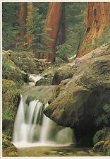 BF26847 forest faus california  USA front/back image