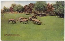 NEW YORK ZOO - Zoological Park - A Herd of Elk - c1910s era postcard