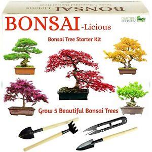 Bonsai Tree Kit, Grow 6 of Your OWN Bonsai Trees from Seeds + 4 Bonsai tools kit