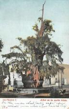 ARBOL DE LA NOCHE TRISTE MEXICO POSTCARD (c. 1905)