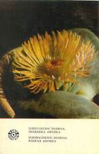 Postcard cactus flower chirilic writing double flower