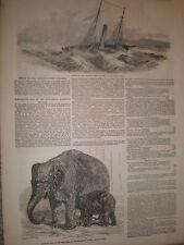 Naufragio della nave a vapore bordo REGINA VINGA ISOLOTTO Danimarca 1851 Old print