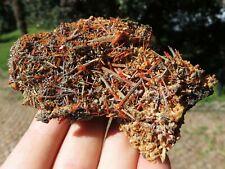 Minerali *** CROCOITE ROSSA in CRISTALLI su MATRICE Tasmania