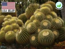 25+ Seeds Echinocactus Grusonii Golden Barrel Cactus Seeds Usa-Seller !