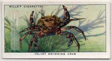 Edible Velvet Crab Necora puber Seafood Marine Ocean  c80 Y/O Ad Trade Card