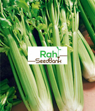 Celery Tall Utah GROW Your Own as it's Easy & Satisfying 100 Seeds