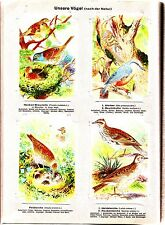 Unsere Vögel I 1932 Kaiser's Waiblingen Sammelbilder Album komplett