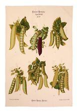 """Ulster Weavers, """"RHS Peas"""", Pure Cotton printed tea towel."""