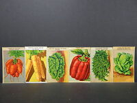 Seed Labels, French, 20+ Labels, VEGETABLES #15