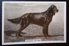 Gordon Setter   Original 1930's Vintage Photo Card