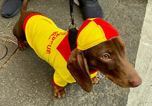 Surf Rescue Lifesaver Dog shirt & cap size xsmall 20cm cotton with collar New