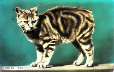 CX04.  Postcard. Manx Cat.  Tailless cat from the Isle of Man