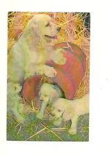 CARDIN BAR-B-Q, ALFRED, ONTARIO, CANADA - DOG & PUPPIES CHROME POSTCARD