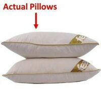 Goose Feather and Down Pillow Pair  Anti Allergy Cotton Case Deluxe Quality  x 2
