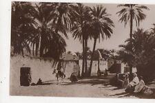 Une Route A Travers l'Oasis North Africa Vintage RP Postcard 473a
