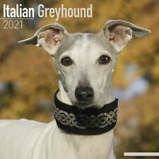 Italian Greyhound Calendar 2021 Premium Dog Breed Calendars