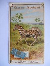 """Chromo """"Chocolat Suchard - Equus zebra"""""""
