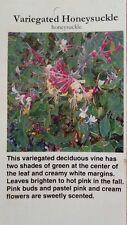 Variegated Honeysuckle 1 Gal. Plant Vine Shrub Flowers Garden Landscaping Vines