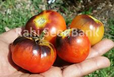 Siberian Tiger Tomato - 10 Seeds!