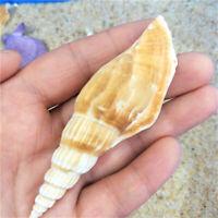 Random 10 pcs Natural Shells 6-9 CM Ax Shaped Conch Shells Home Decorations