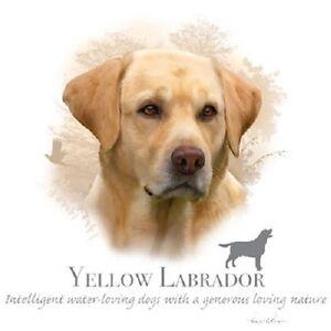 YELLOW LABRADOR New Profile  Dog  Tshirt   Sizes/Colors