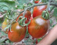 🔥 🍅 VENUSBRÜSTCHEN bunte Tomate 10 Samen alte Sorte Tomaten samenfest