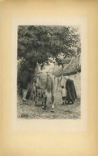 ANTIQUE EQUESTRIAN HORSE TREE MAN RIDING CLOTHES THATCHED COTTAGE MOM BOY PRINT