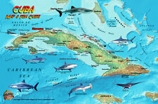 Cuba Dive Map & Coral Reef Creatures Guide Franko Maps Laminated Fish Card