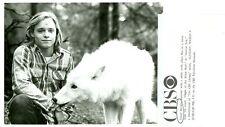 LANCE KERWIN WITH WHITE WOLF ANIMAL TALK ORIGINAL 1980 CBS TV PHOTO
