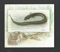 ALLEN & GINTER - FISH FROM AMERICAN WATERS (LARGE) - EEL