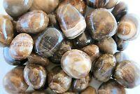 One Chocolate Brown Calcite Tumbled Stone Peru 20-25mm Healing Crystal Reiki