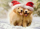 Avanti Press Two Golden Puppies Running in Snow Cute Dogs Christmas Card photo