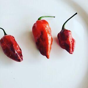 Darth Maul Pepper Seeds RARE