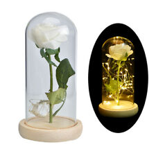 Eternal Rose White Preserved Flower LED Light In Glass Dome Valentine Gifts