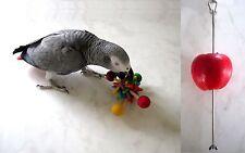Papageien Spielzeug Crazy Lollis, Tischspielzeug + Edelstahl Früchtespieß, wow !