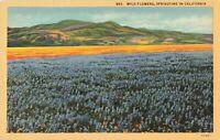 Postcard Wild Flowers California