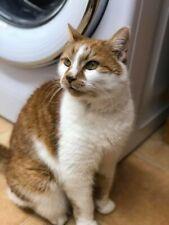 Please help sponsor Buddy at Sandbach Animal Rescue