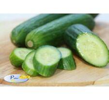 Rare Seeds Salad Cucumber Yemelya Organically Grown Russian Heirloom Vegetable