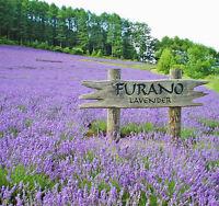 1 Pack 400 Purple Lavender Seeds Lavandula Angustifolia