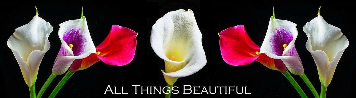 Rachel's All Things Beautiful
